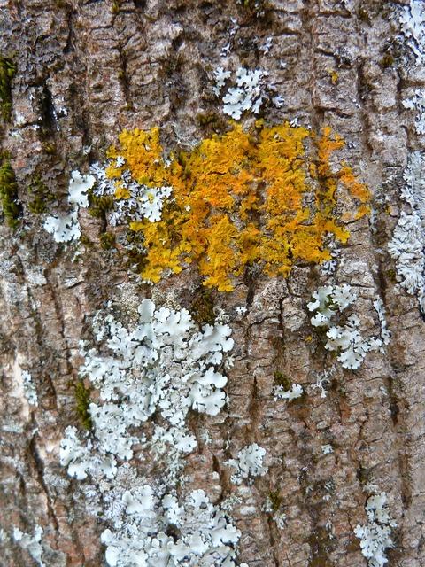 Trees nature lichens, nature landscapes.