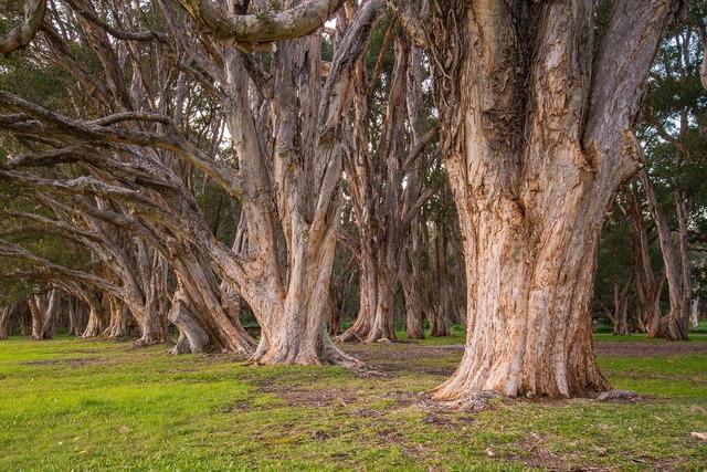Trees park botanical.