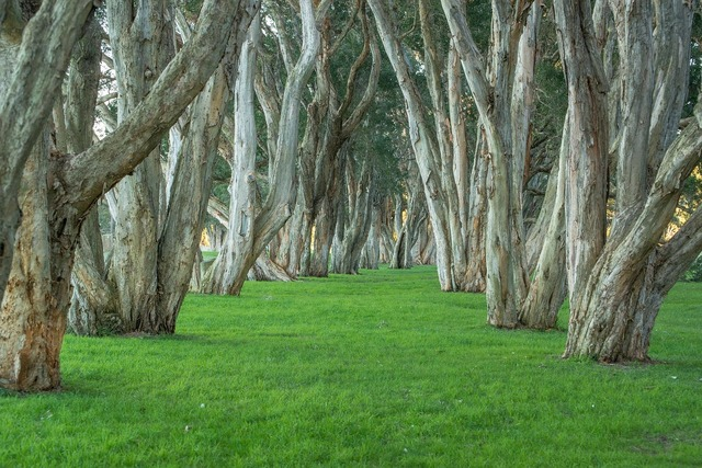 Trees park centennial park.