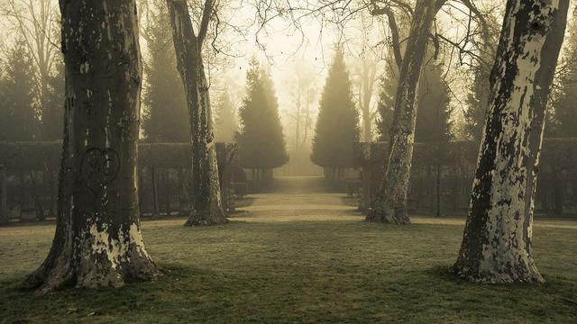 Trees park fog.