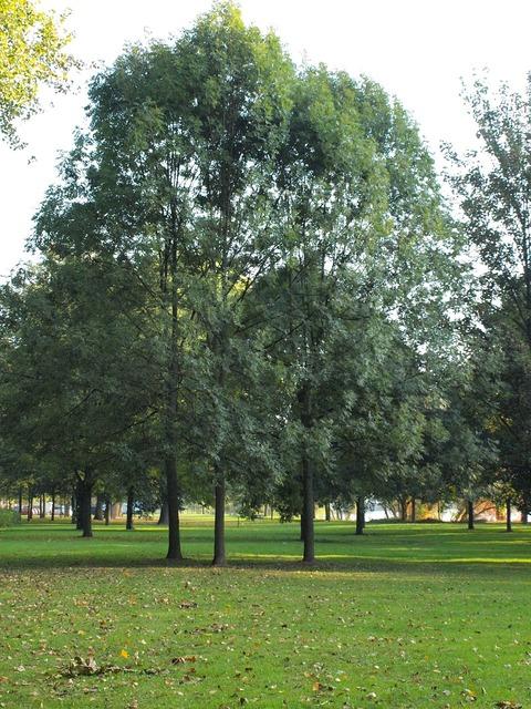 Trees park main banks.