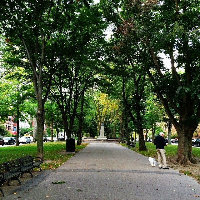 Trees pathway park.