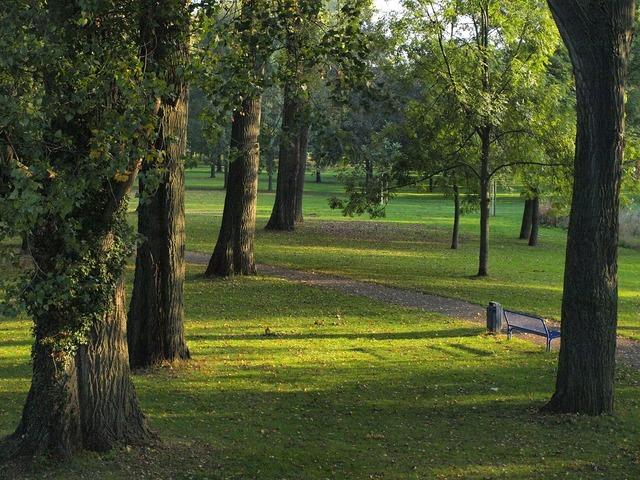 Trees poplars park.