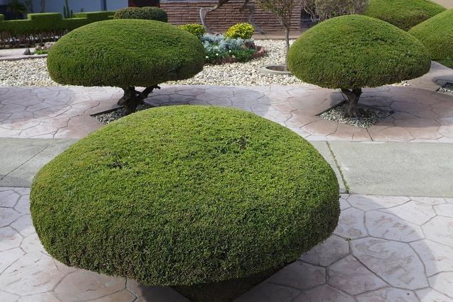Trees trimmed shaped, nature landscapes.