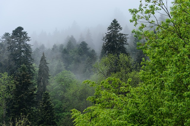Triberg black forest fog, nature landscapes.