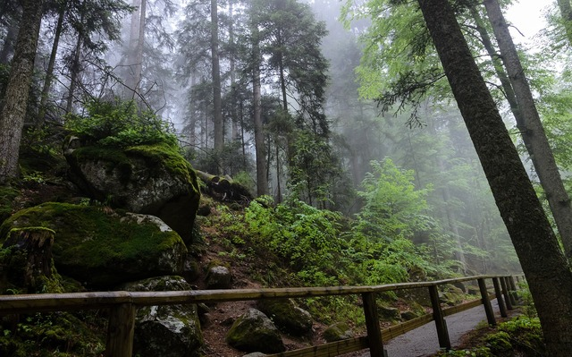 Triberg black forest germany, nature landscapes.