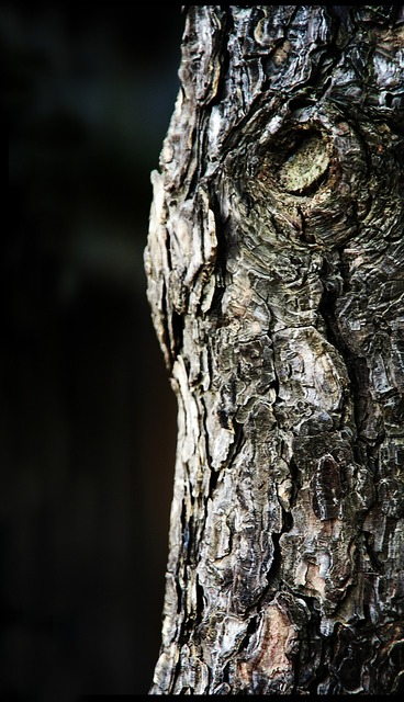 Trunk and thu wood, nature landscapes.