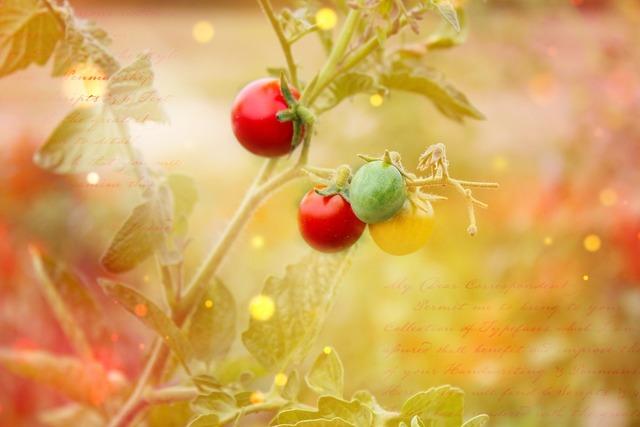 Trusses vegetables tomatoes, nature landscapes.
