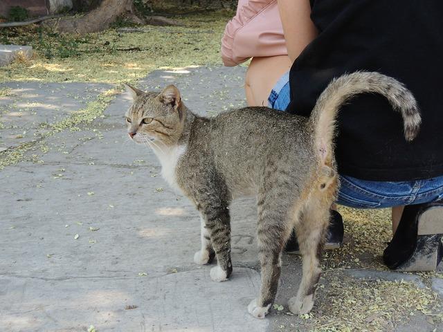 Turkey izmir cat, animals.