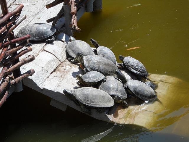 Turtle lake in the sun.
