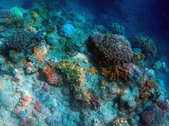 Under the sea deep sea fish, travel vacation.
