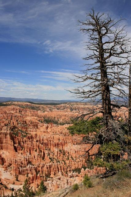 Usa bryce canyon national park.