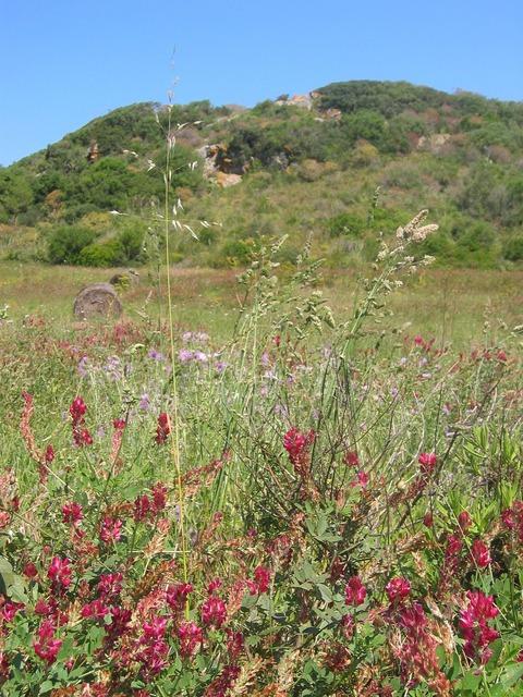 Vegetation plant summer, nature landscapes.