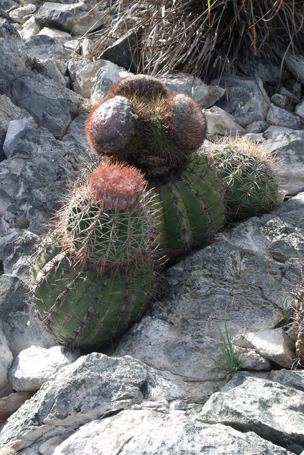 Venezuela cactus rocks, nature landscapes.