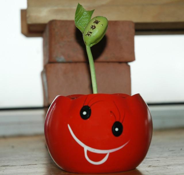 Venus flytrap sprout.