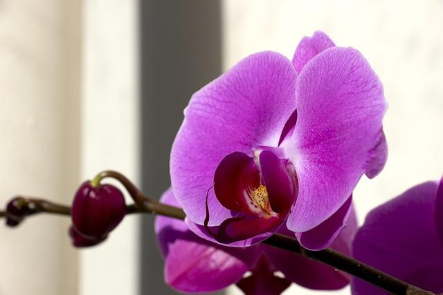 Veranda flowers plants, nature landscapes.