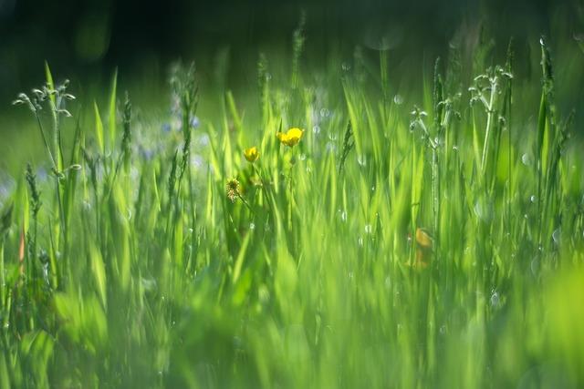 Vernal grass green.