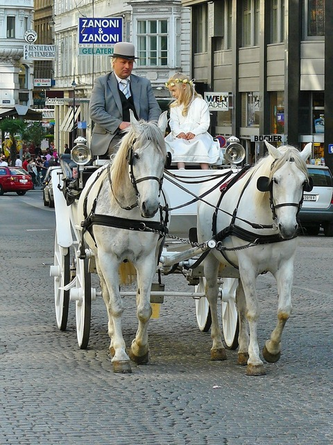 Vienna coach carriage ride, people.