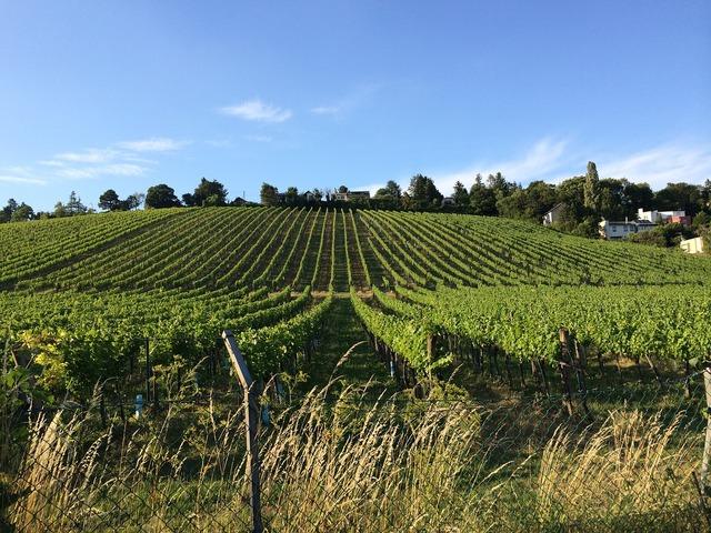 Vienna vineyard hernals.