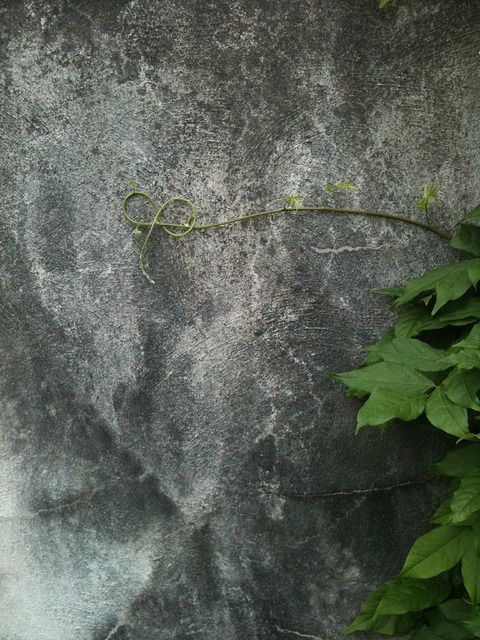 Vine curl grey, backgrounds textures.