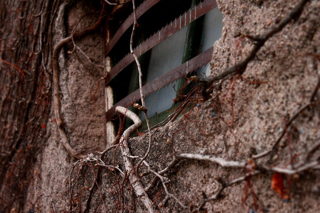 Vine plant window, nature landscapes.