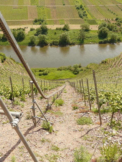 Vineyard steep slope winegrowing.