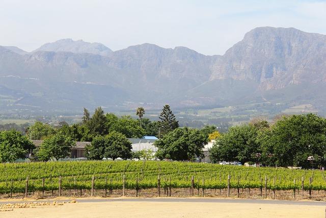 Vineyard vine breathtaking.