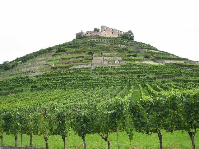 Vineyards ruin castle.