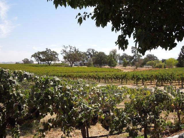 Vineyards wine country vineyard, nature landscapes.