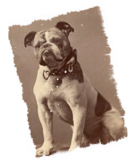 Vintage photograph dog, animals.