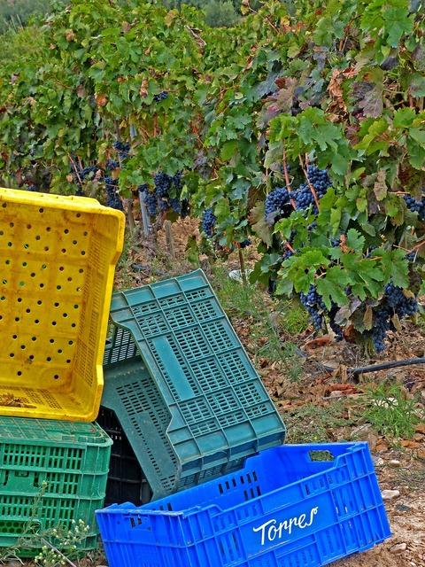 Vintage vineyard boxes.
