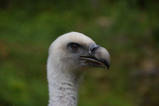 Vulture wildlife park wild animal, nature landscapes.