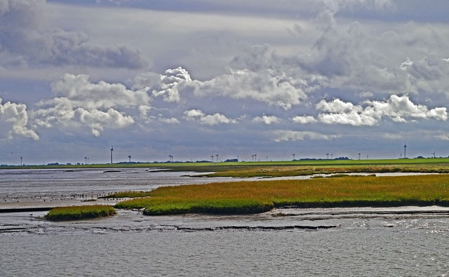 Wadden sea salt marshes tides.