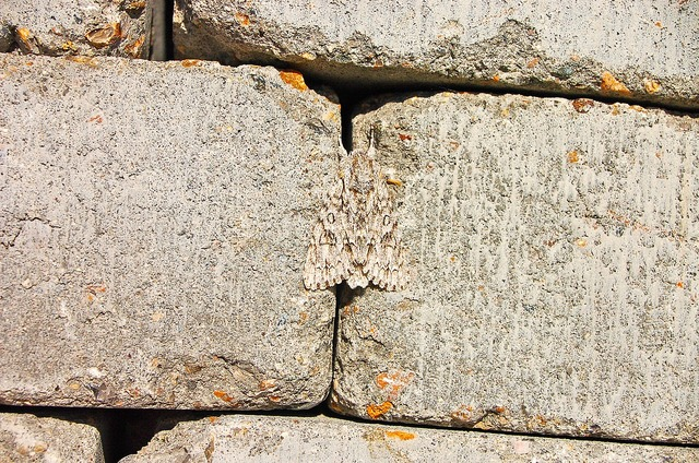 Wall camouflage summer.