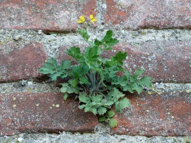 Wall fouling plant, nature landscapes.