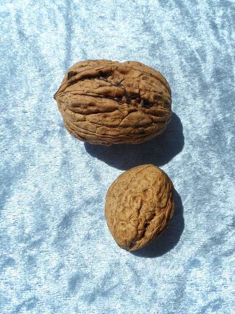 Walnut large huge, food drink.