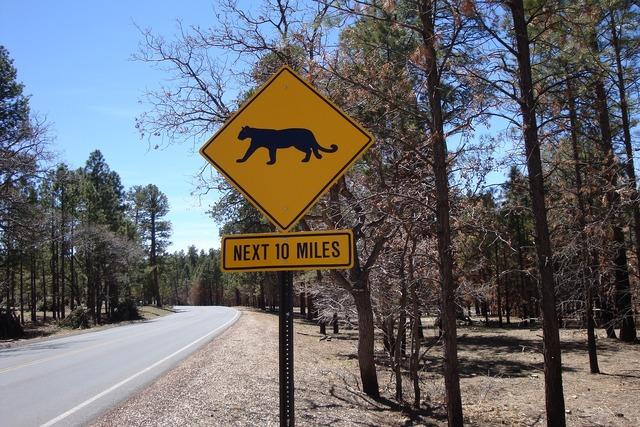 Warning sign traversing wild wild animals.