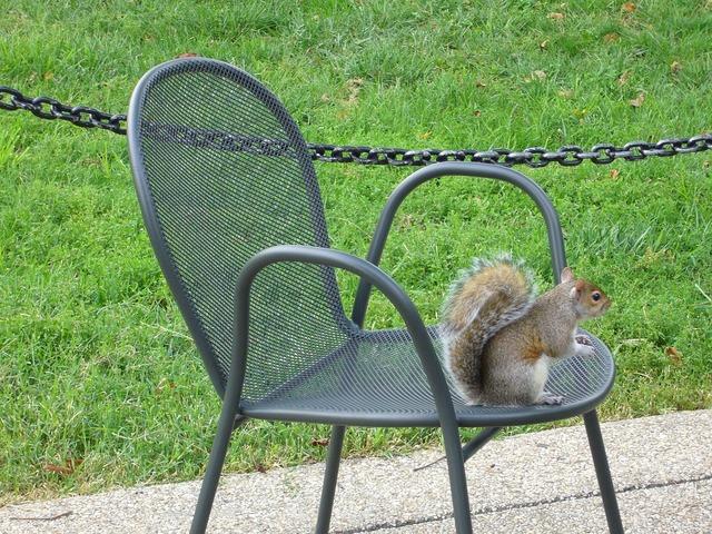 Washington park squirrel.