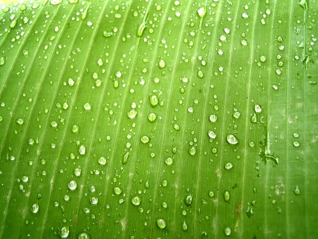 Water drops leaf, nature landscapes.