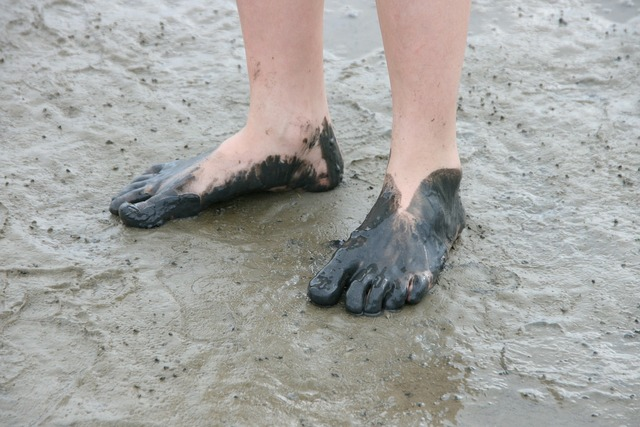 Watt feet watts wadden sea.