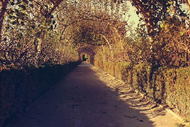 Way path park.
