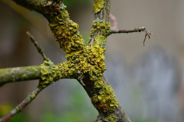 Weave moss branch, nature landscapes.