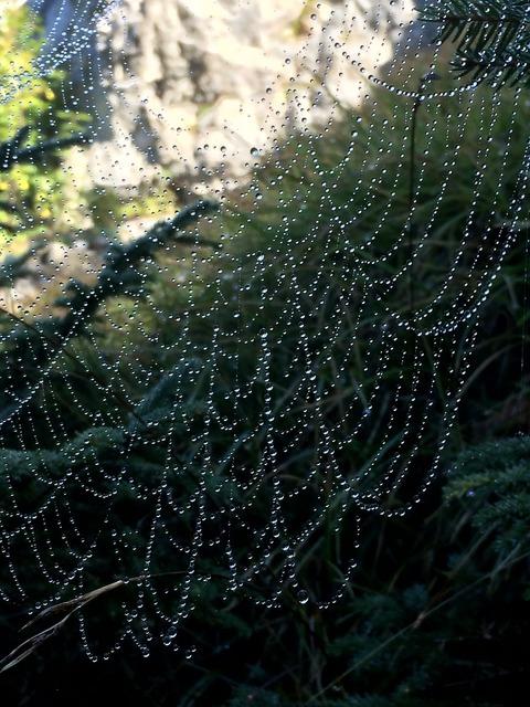 Web dew mountains.