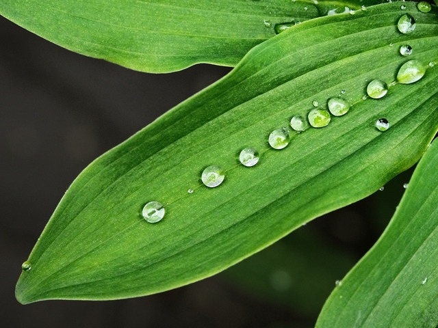 Wet leaf droplets, nature landscapes.