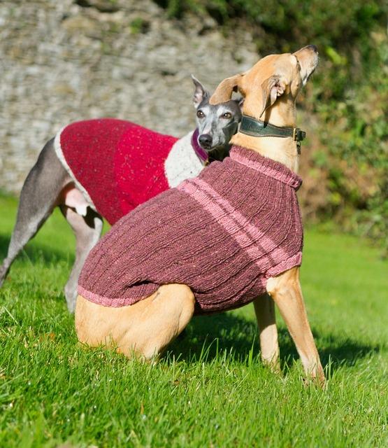 Whippet dog jacket, animals.