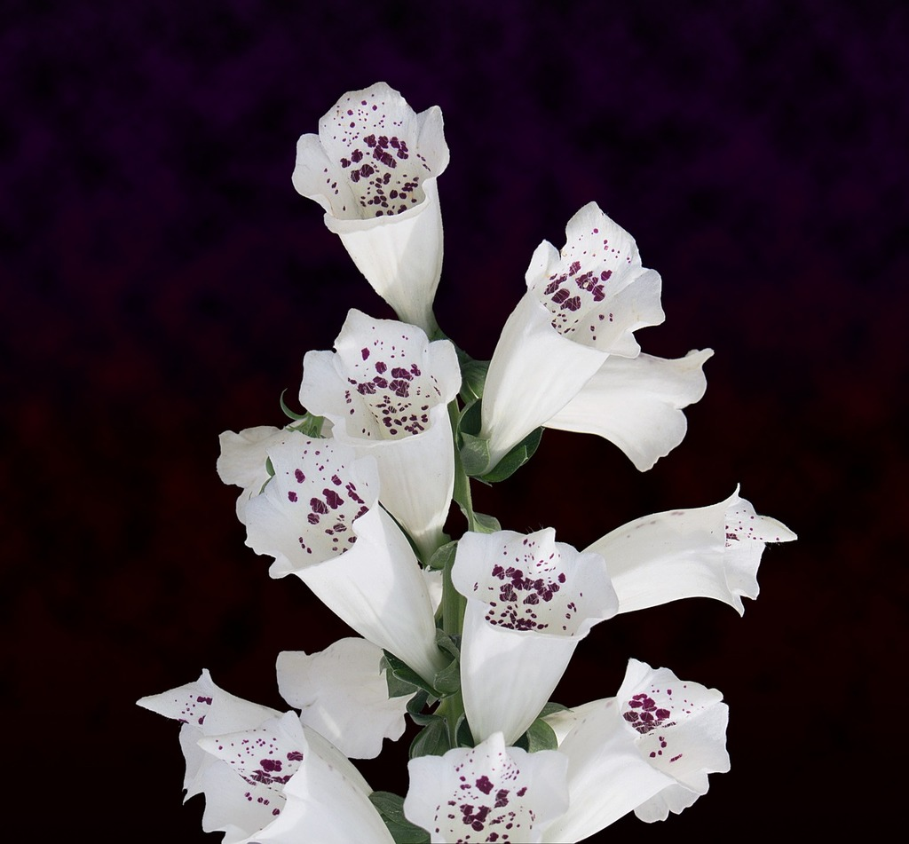 White Flowers Cluster Flowers Bouquet Backgrounds Textures Picryl