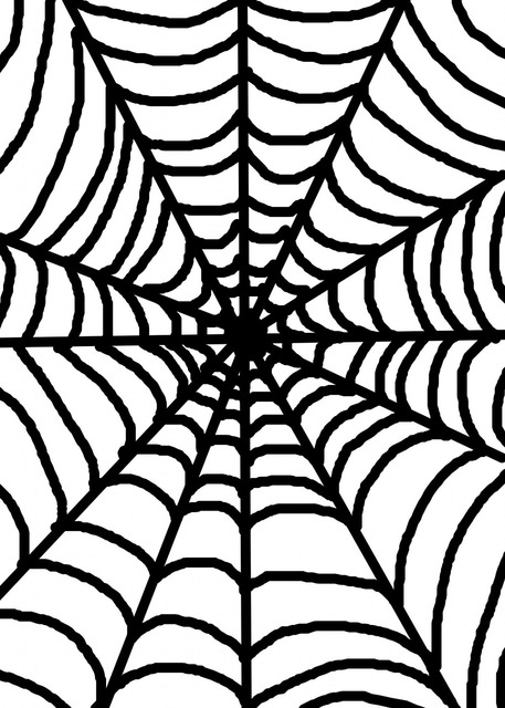 White spider web, backgrounds textures.