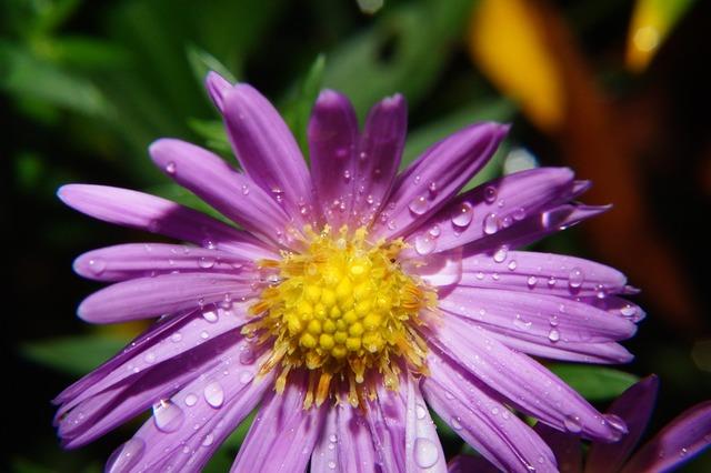 Wild flower blossom bloom, nature landscapes.
