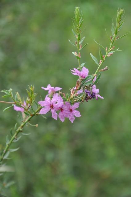 Wild flowers flower plant, nature landscapes.