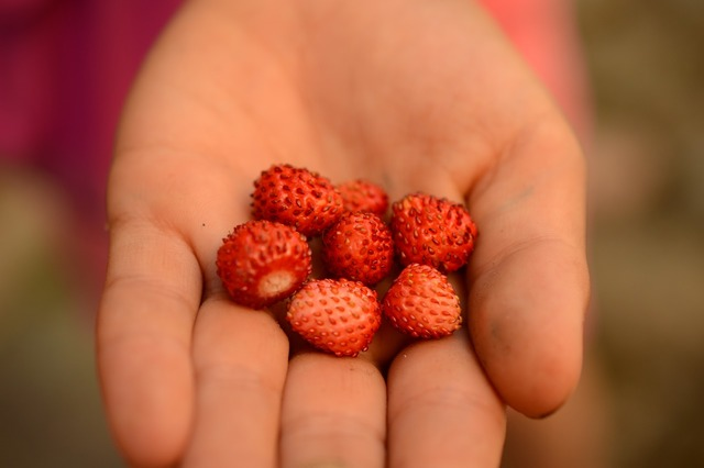 Wild strawberry hand summer.